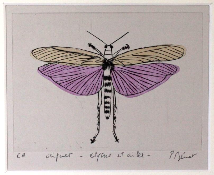 criquet élytres et ailes, linogravure  (15 x 12 cm) 2014 encadré( 18 x 15 cm) (2)