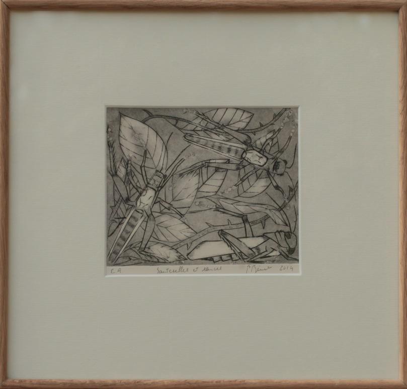 Sauterelles et ronces, burin et pointe sèche (13 x 14 cm) 2014 encadré( 33 x 34 cm)